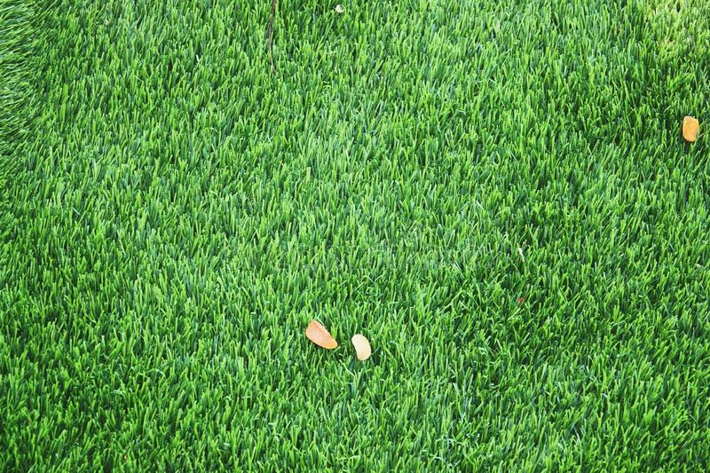Green lawn texture background. Green grass background texture. top view.  stock image