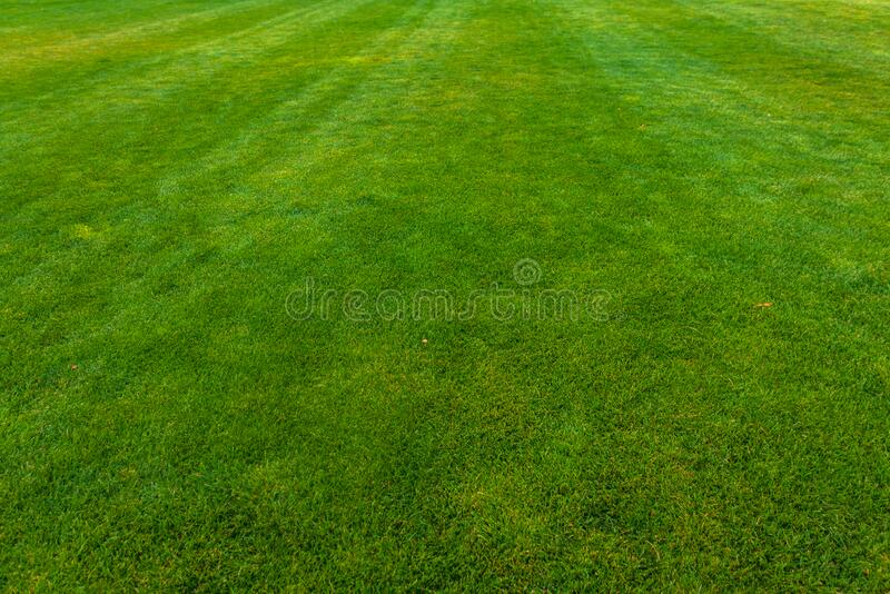 Green lawn with trimmed grass.  royalty free stock photography
