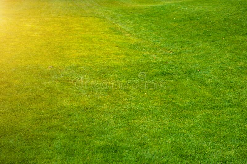 Green lawn with trimmed grass.  stock image