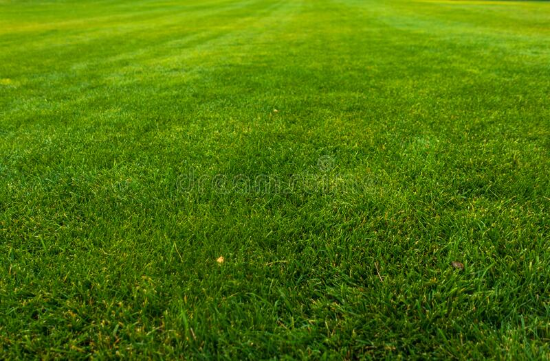 Green lawn with trimmed grass.  royalty free stock photos