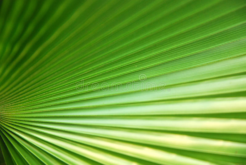 Green leaf. Like a radial line stock images
