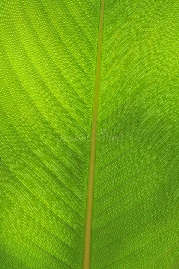 Free Green Leaf Royalty Free Stock Photo - 14026795
