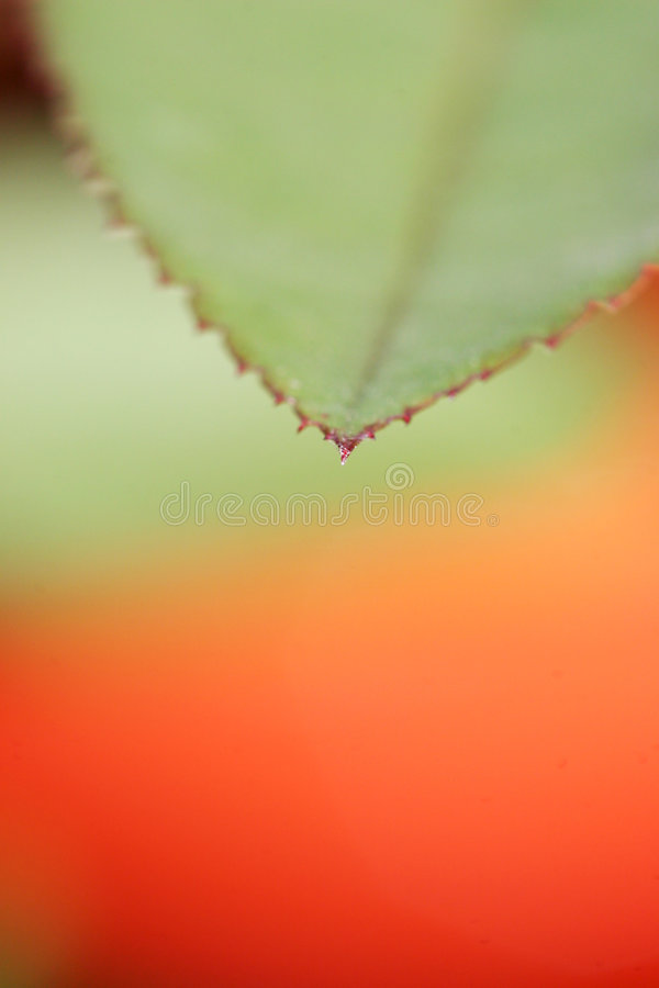 Download Green leaf stock photo. Image of field, wild, weed, yard - 260560