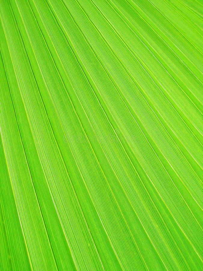 Download Green Leaf stock image. Image of leaf, environmental - 26338987
