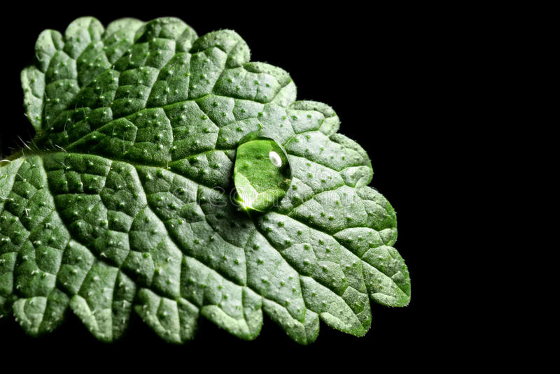 Download Green leaf stock photo. Image of freshness, detail, fresh - 28524682