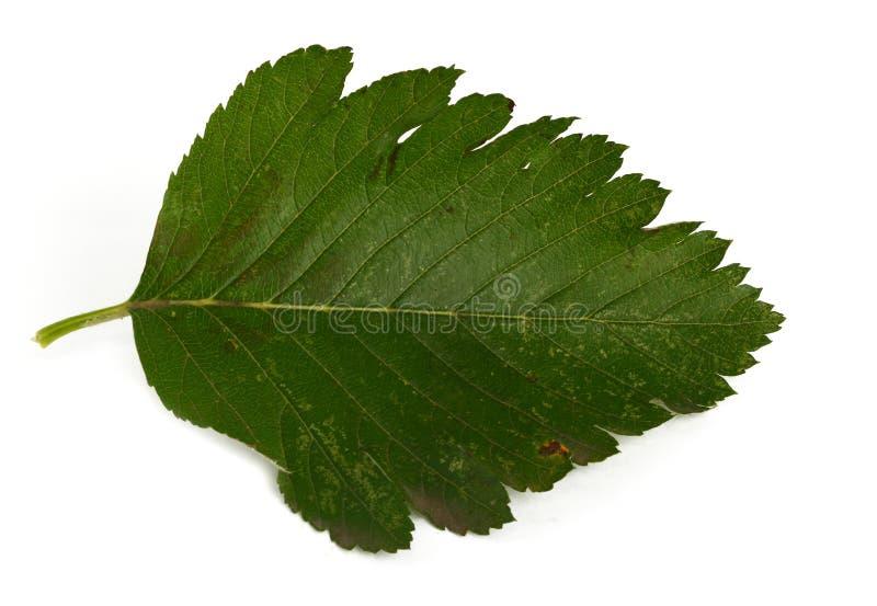 Download Green leaf stock image. Image of leaf, colored, patterned - 3233393