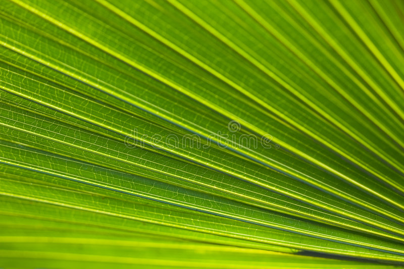 Download Green leaf stock image. Image of insect, green, bright - 4630069