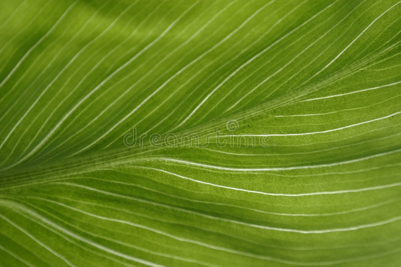 Download Green leaf stock photo. Image of green, colors, cell, flora - 525580