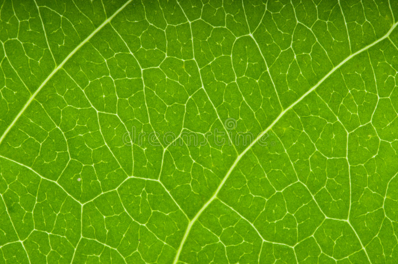Download Green Leaf. Stock Photos - Image: 5521903