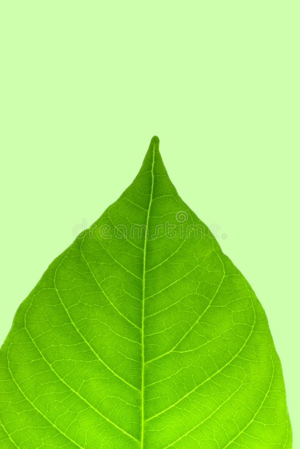 Download Green leaf stock image. Image of lines, curl, colour, green - 5882869