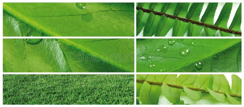 Download Green leaf 6 stock image. Image of concept, drop, bracket - 5550105
