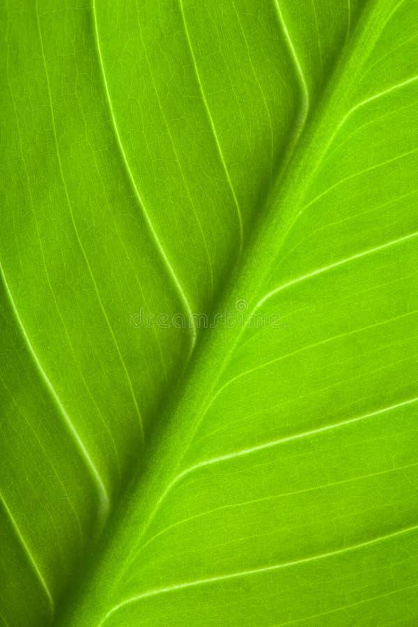 Free Green Leaf Royalty Free Stock Photo - 7883525