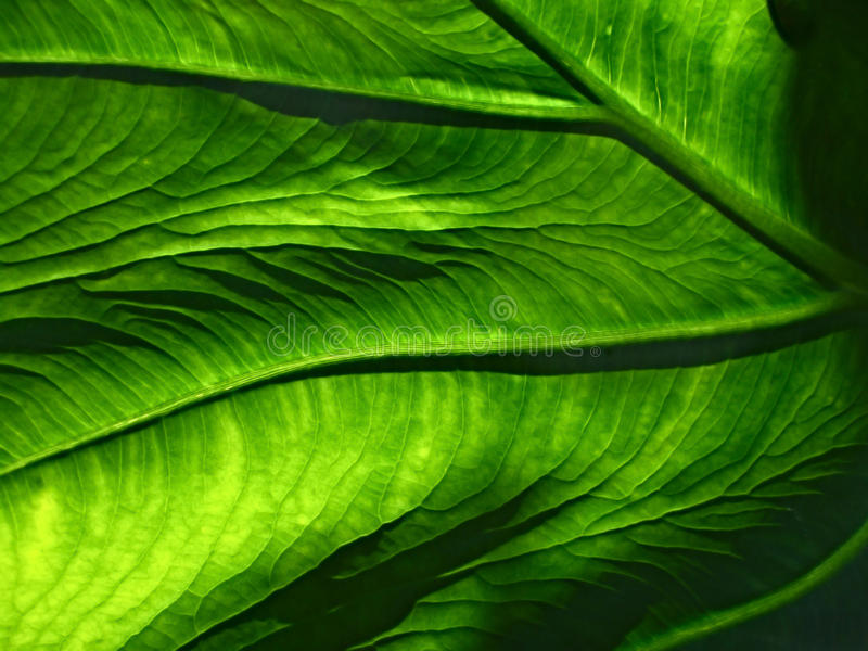 Download Green Leaf stock photo. Image of green, plant, stock - 82958460