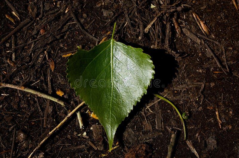 Green Leaf Free Public Domain Cc0 Image
