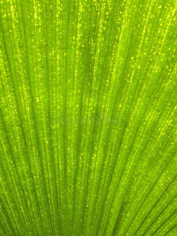 Download Green leaf stock image. Image of lines, pattern, leaf - 9353421