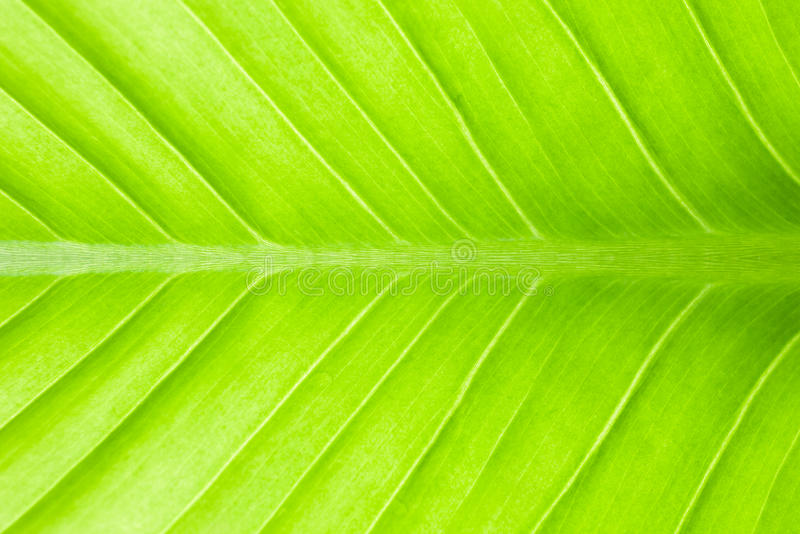 Green leaf abstract royalty free stock image