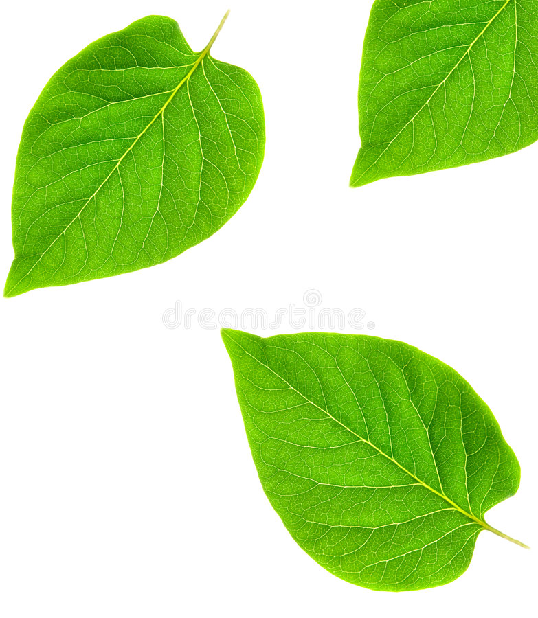 Download Green leaf abstract frame stock photo. Image of color - 2953978