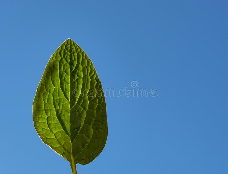Green leaf against the sky stock photography
