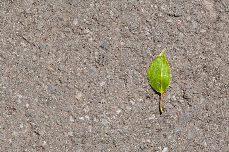Green leaf on the asphalt royalty free stock photography