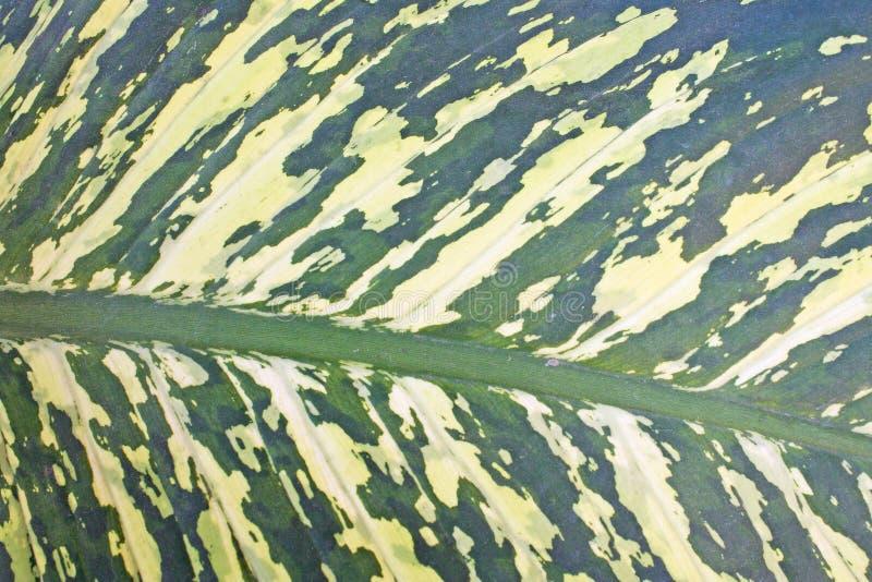 Green leaf backdround. Close up Green leaf backdround royalty free stock image