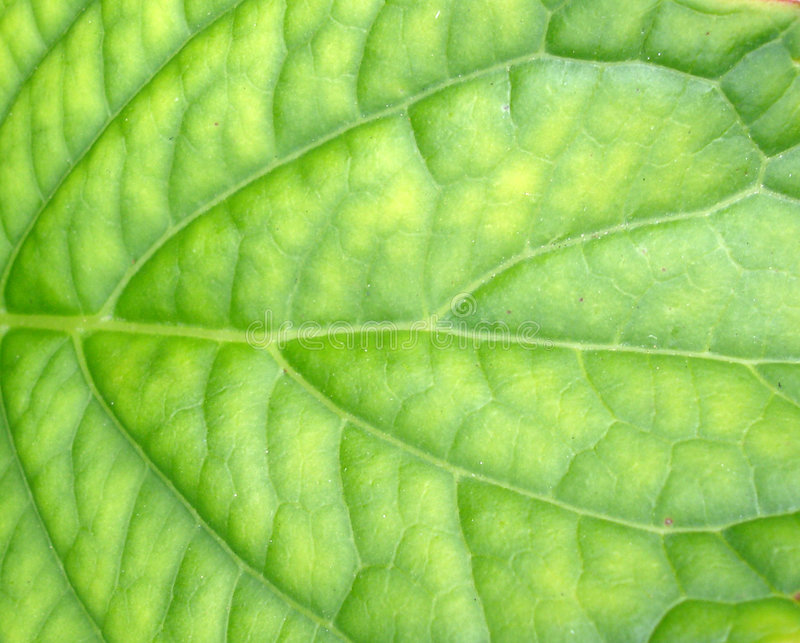 Download Green Leaf Background stock image. Image of nature, grow - 191073