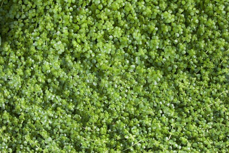 Download Green Leaf Background stock image. Image of backgrounds - 41341407