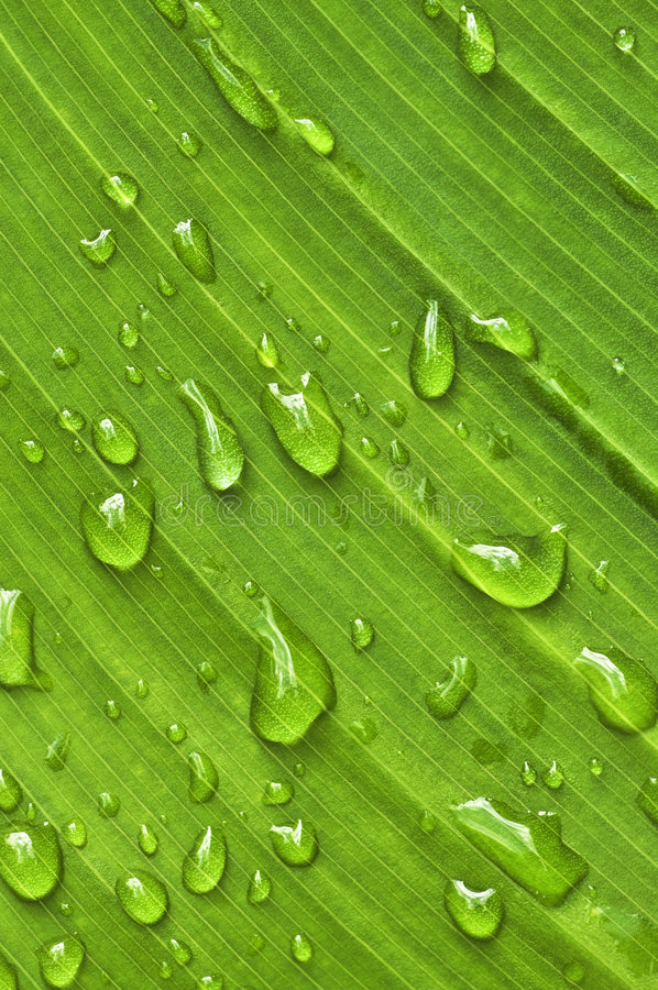 Download Green Leaf Background With Raindrops Royalty Free Stock Images - Image: 6424289
