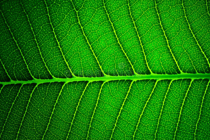 Download Green Leaf Background Texture Stock Photo - Image of backdrop, greenery: 24099214