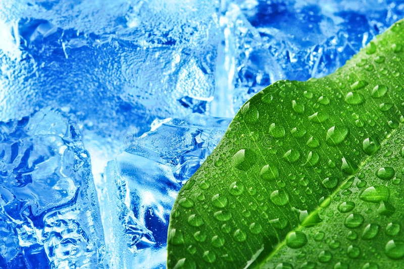 Green leaf with blue ice stock image