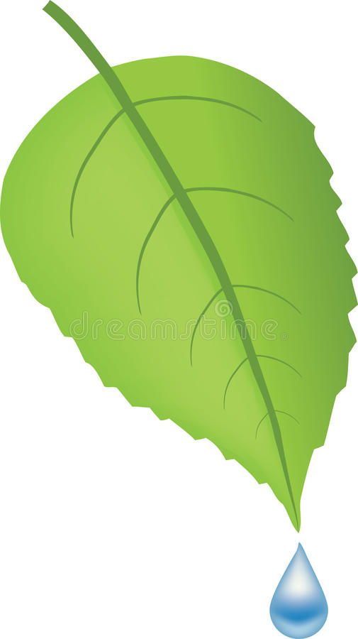 Green Leaf And Blue Water Drop Stock Photos