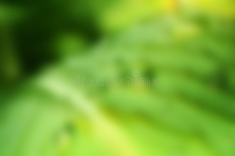 Green leaf blur. Green and yellow colors. Gaussian blur stock photo