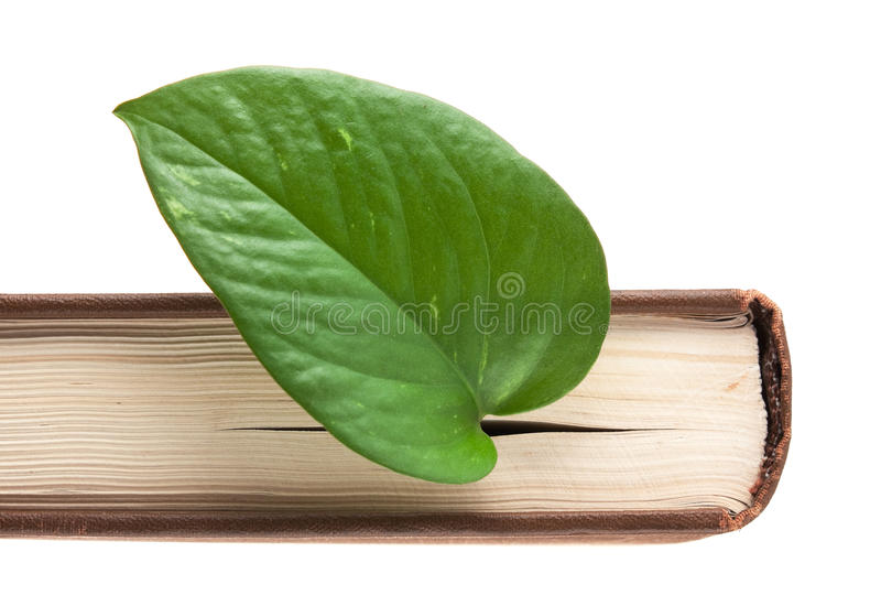 Green leaf bookmark in a book royalty free stock photography