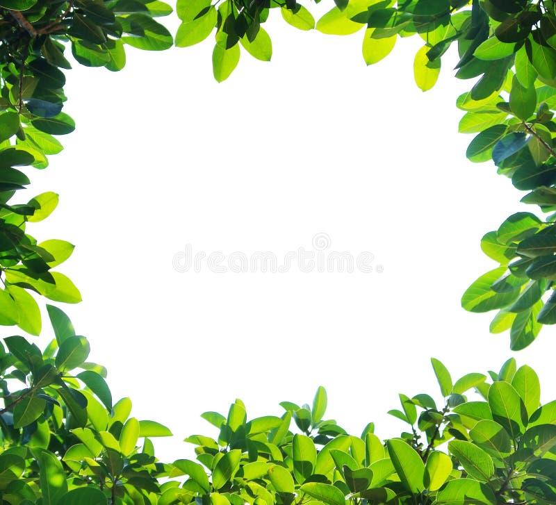 Green leaf border. Isolated on white background