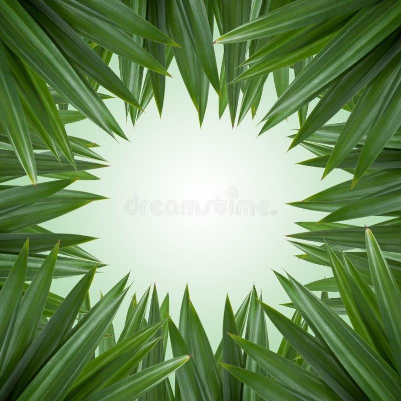 Green leaf border stock images