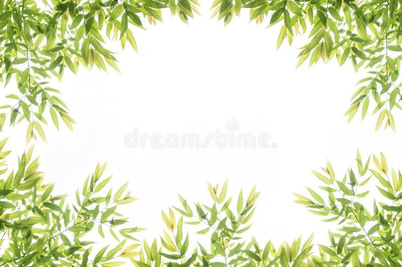 Green leaf border frame for background stock image