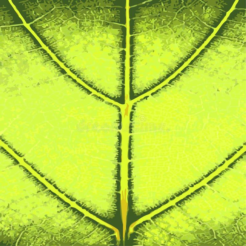 Download Green Leaf Close Up stock vector. Illustration of leaf - 8581808