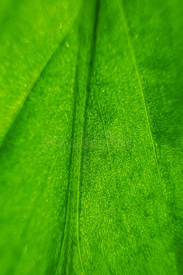Green leaf close-up, abstract macro photo. Background image. Background image. Concept of spring, summer stock image