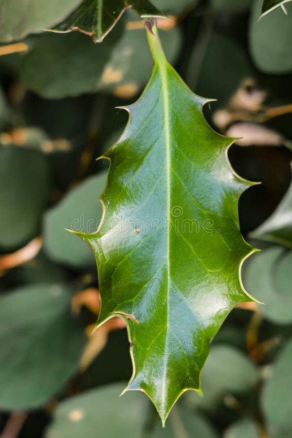 Green Leaf in Close Up Photo royalty free stock photography