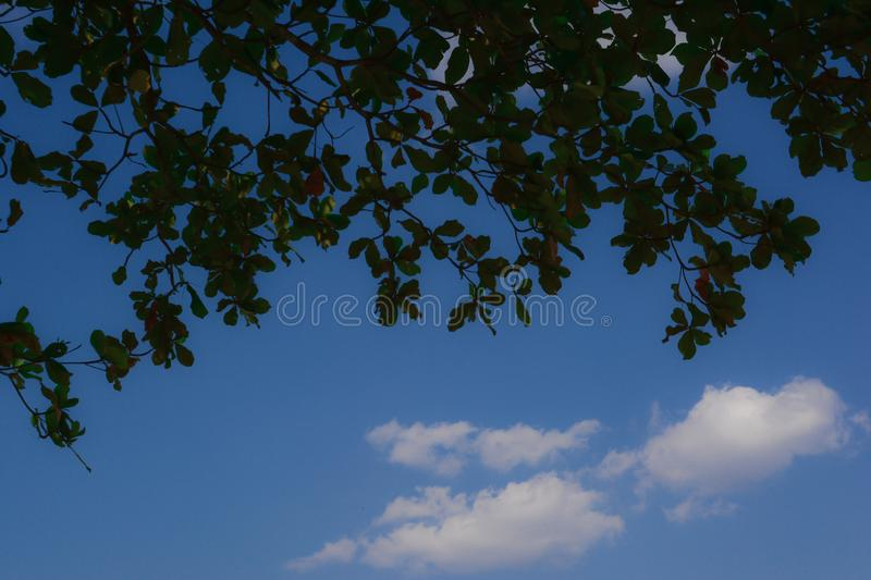 Green leaf with cloud blue sky background. And look so cool stock photography