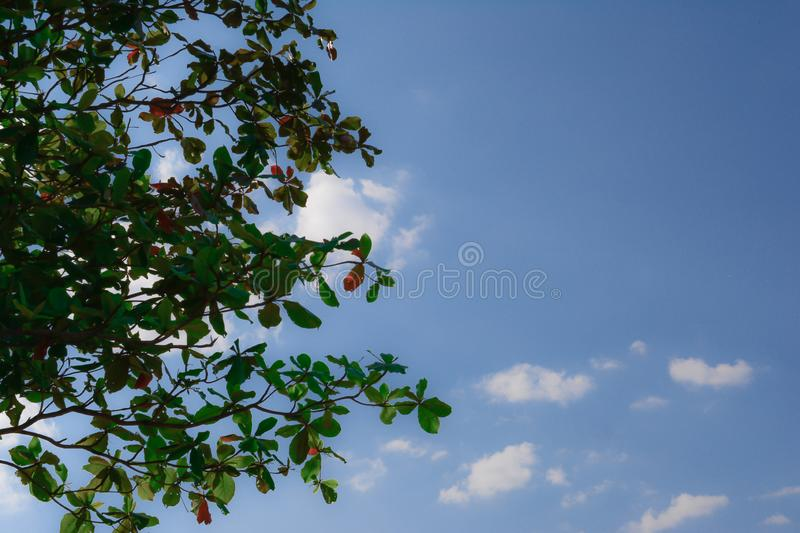 Green leaf with cloud blue sky background. And look so cool royalty free stock images