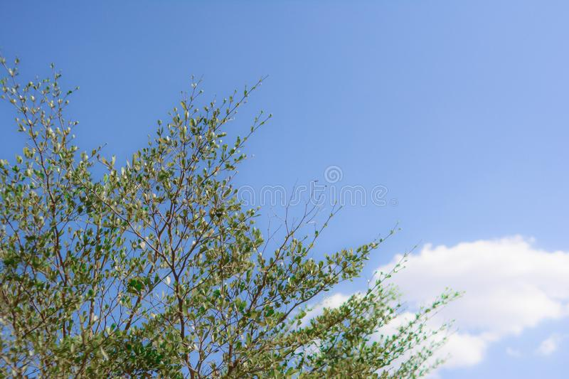 Green leaf with cloud blue sky background. And look so cool royalty free stock photo