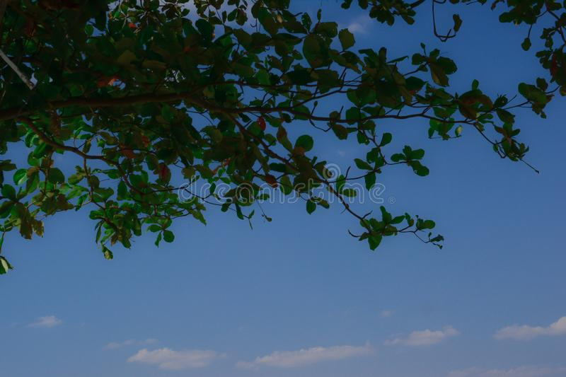 Green leaf with cloud blue sky background. And look so cool stock photos