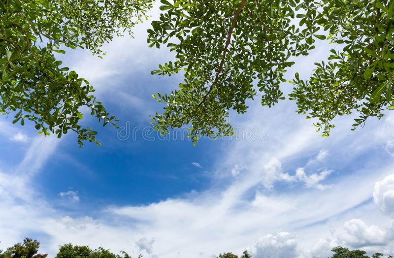 Green leaf with Cloud bright sky. Green leaf on tree, Natural frame with Cloud bright sky background with space stock images
