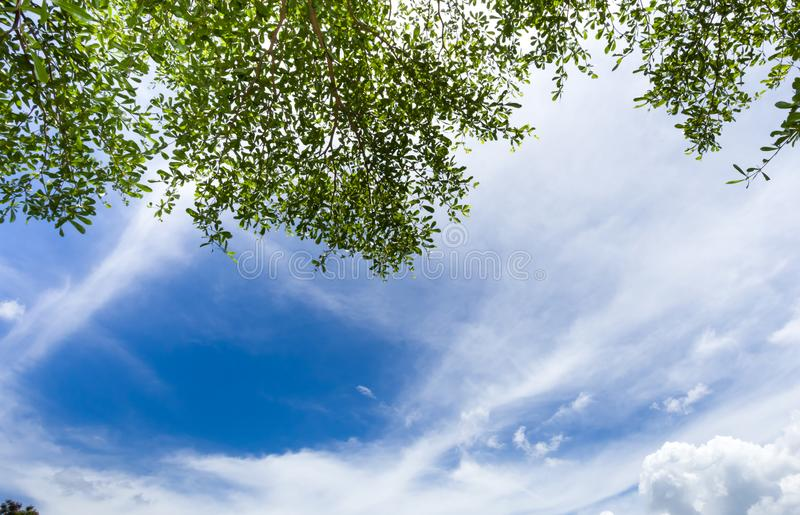 Green leaf with Cloud bright sky. Green leaf on tree, Natural frame with Cloud bright sky background with space stock photography