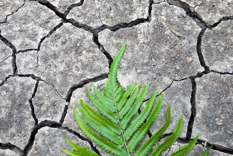 Green leaf on cracked ground. Cracked ground with green leaf stock photos