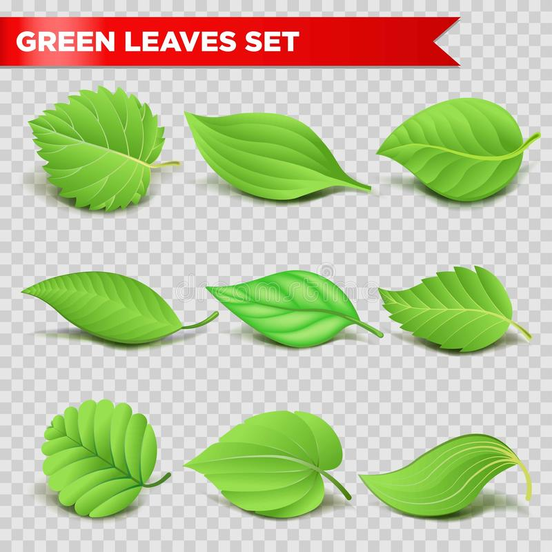 Green leaf 3d relaistic icons eco environment or bio ecology vector symbols stock illustration