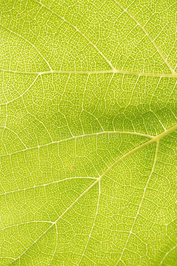 Free Green Leaf - Detail Stock Photo - 10779860