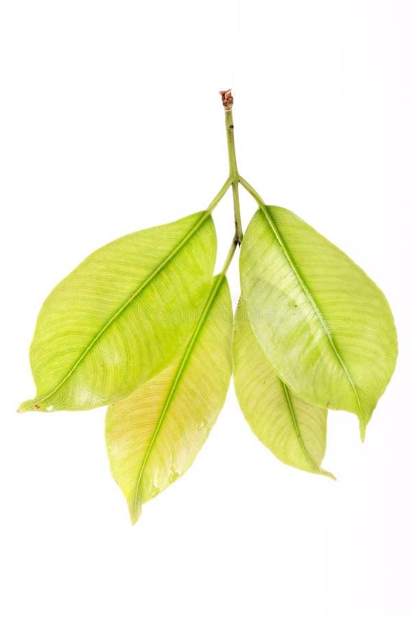 Green leaf detail stock images
