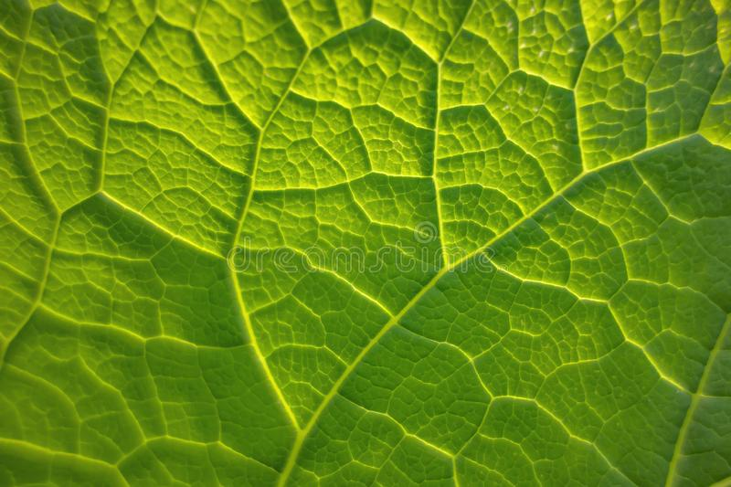 Green leaf detail. Full frame abstract green plant leaf closeup stock images