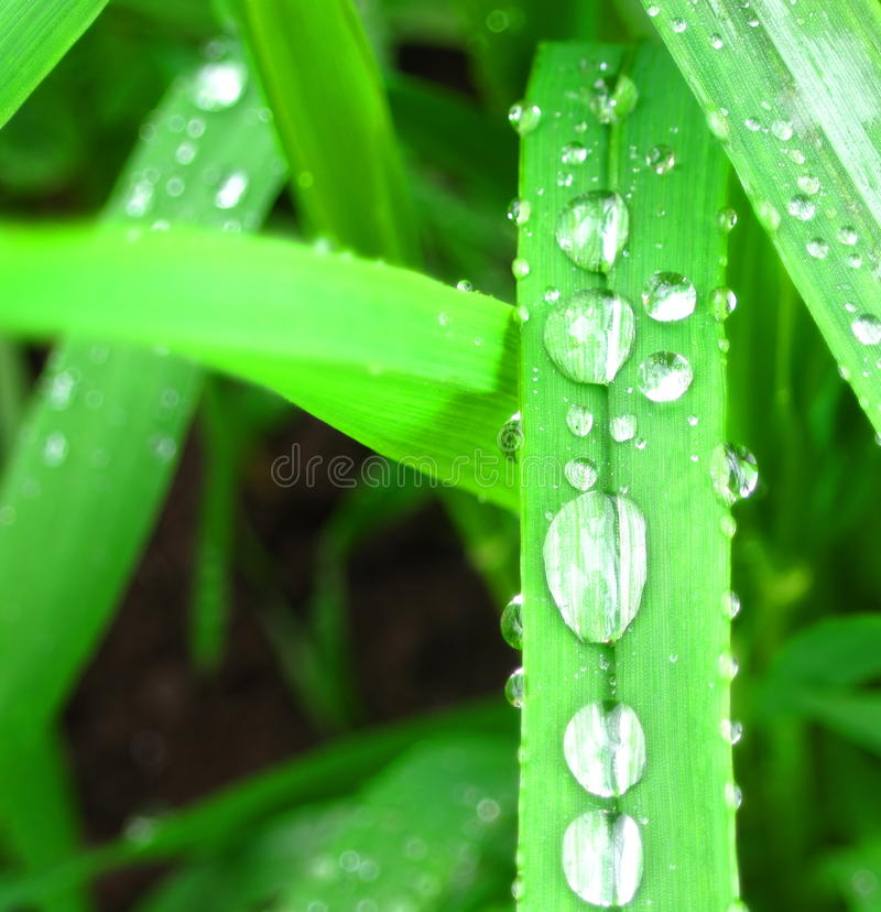 Download Green leaf with dew stock photo. Image of roric, environment - 13222130
